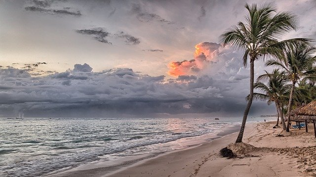 plage couchée de soleil avec un palmier